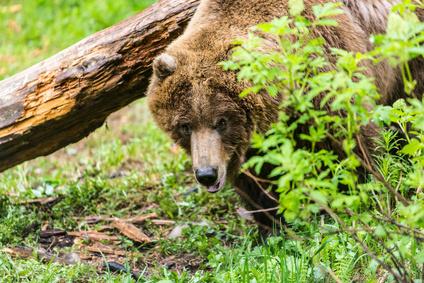 登山で熊に遭遇したら